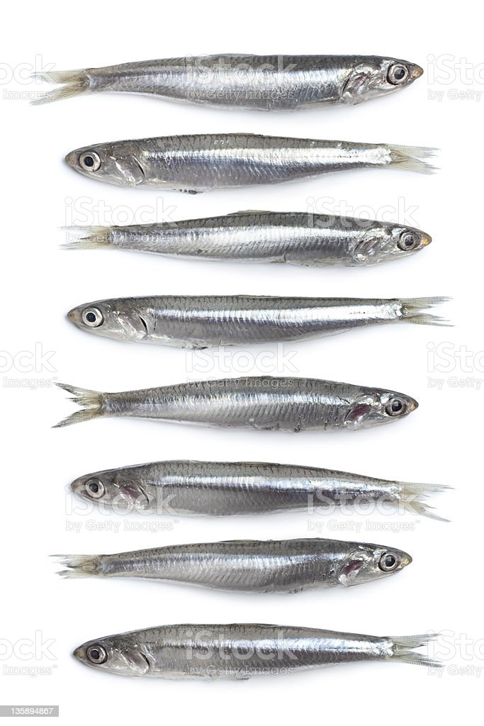 Whole fresh raw European anchovy stock photo