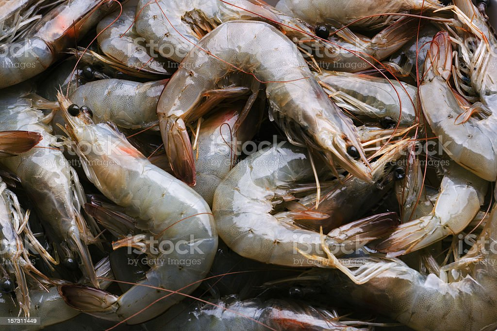 Whole Fresh Raw Shrimps Seafood in Food Market Retail Display stock photo