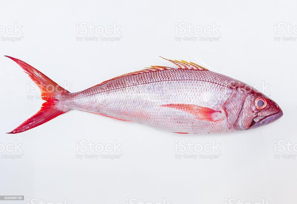 Whole fresh red fish isolated on white background stock photo