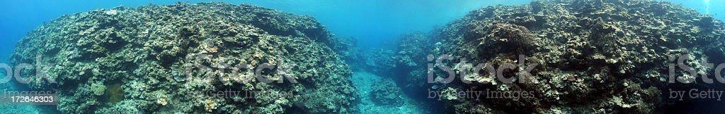 Whole lotta Reef royalty-free stock photo