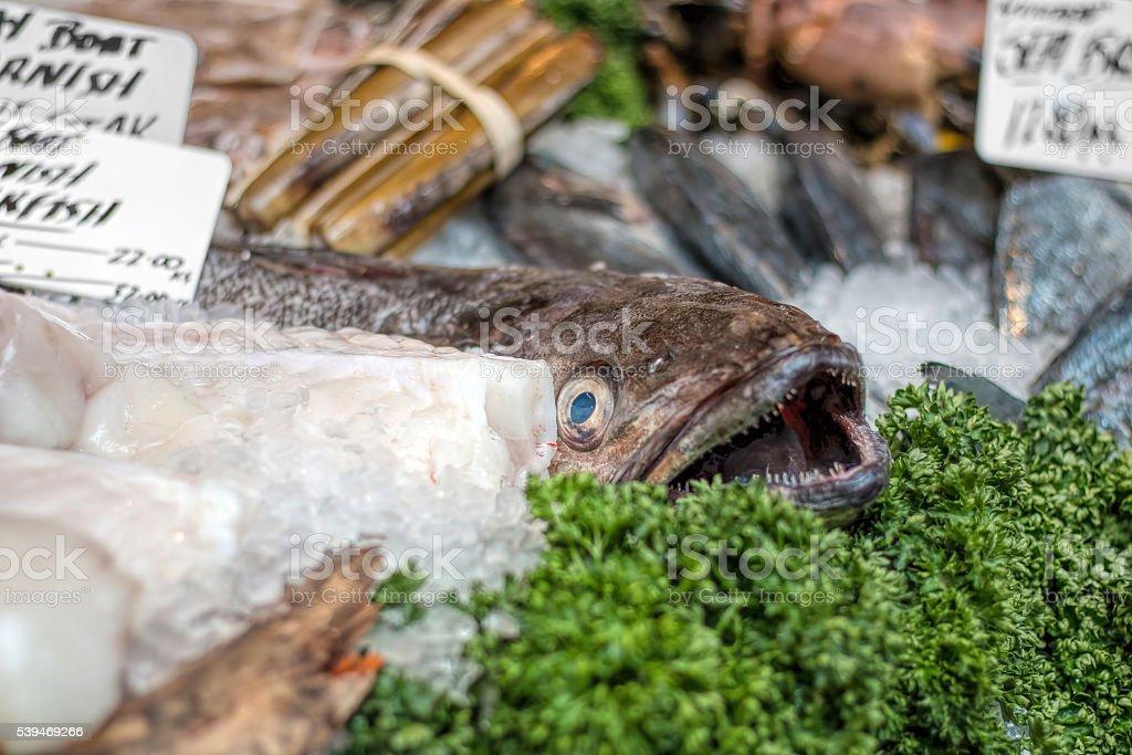 Whole monkfish on display at sea food market counter. stock photo