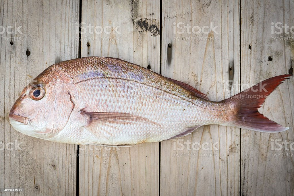 Whole Raw Snapper Fish stock photo