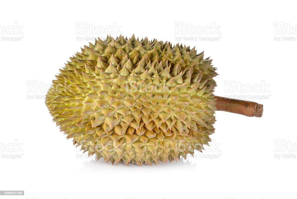 whole ripe Durian with stem on white background stock photo