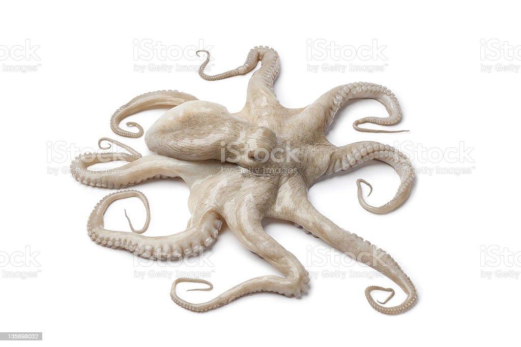 Whole single fresh raw octopus stock photo
