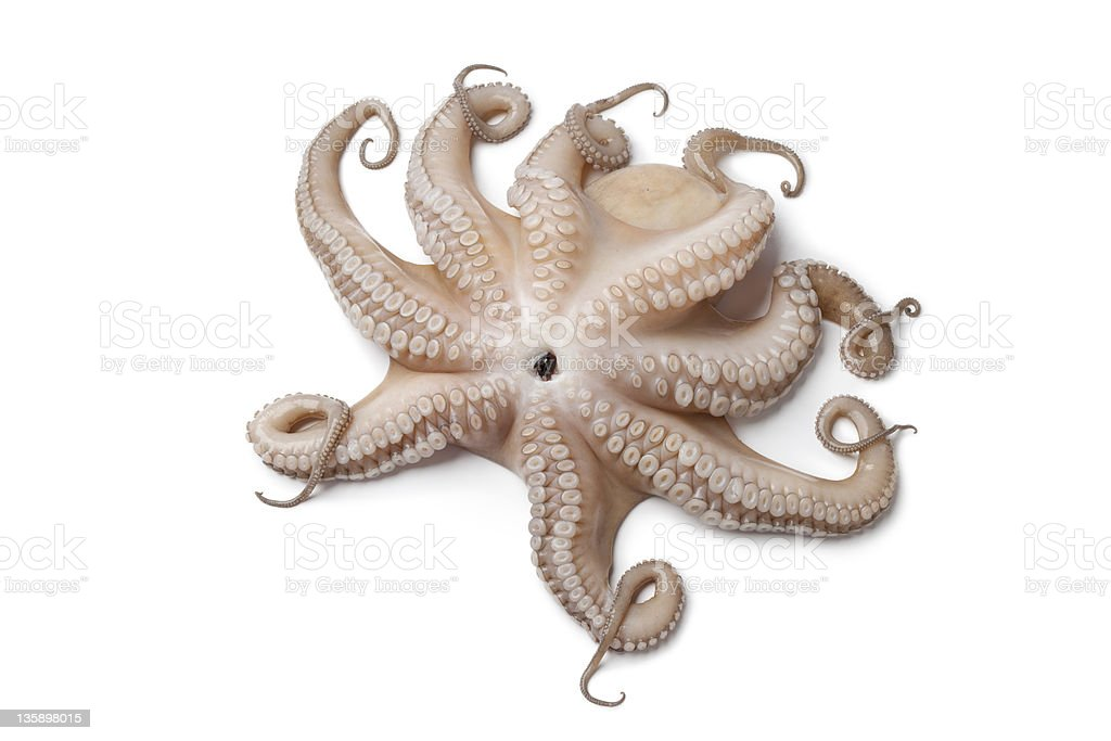 Whole single fresh raw octopus up side down royalty-free stock photo