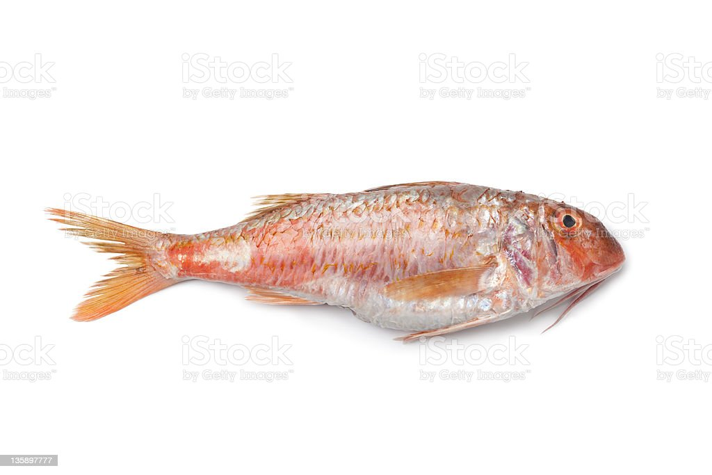 Whole single fresh Red mullet stock photo