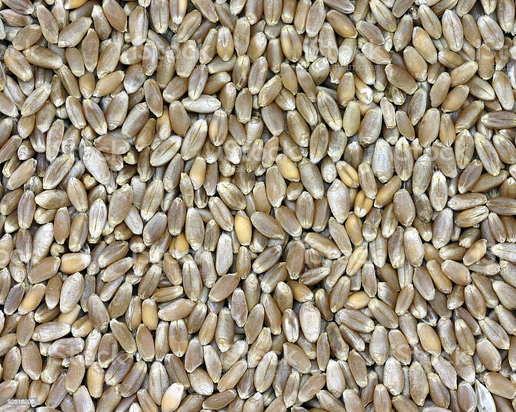 whole wheat (hard red wheatberries) royalty-free stock photo