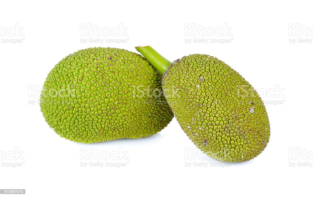 whole young jackfruit with stem on white background stock photo