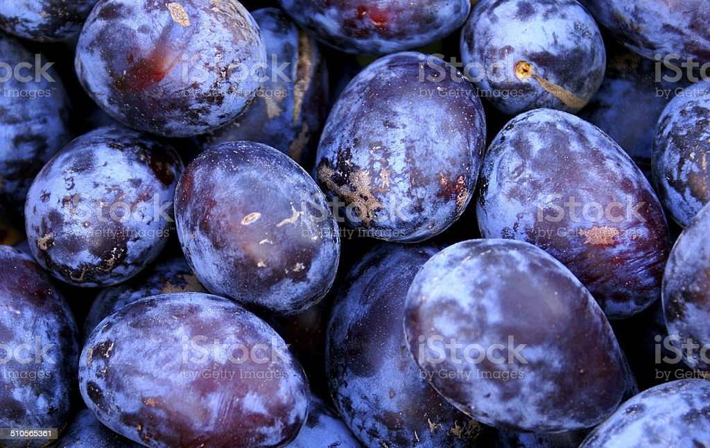 Wholesale plum fruits background stock photo