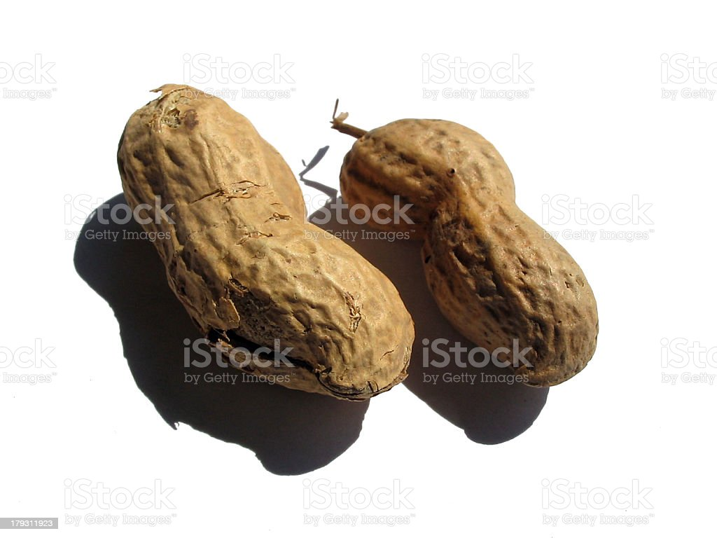 who's a nut? royalty-free stock photo