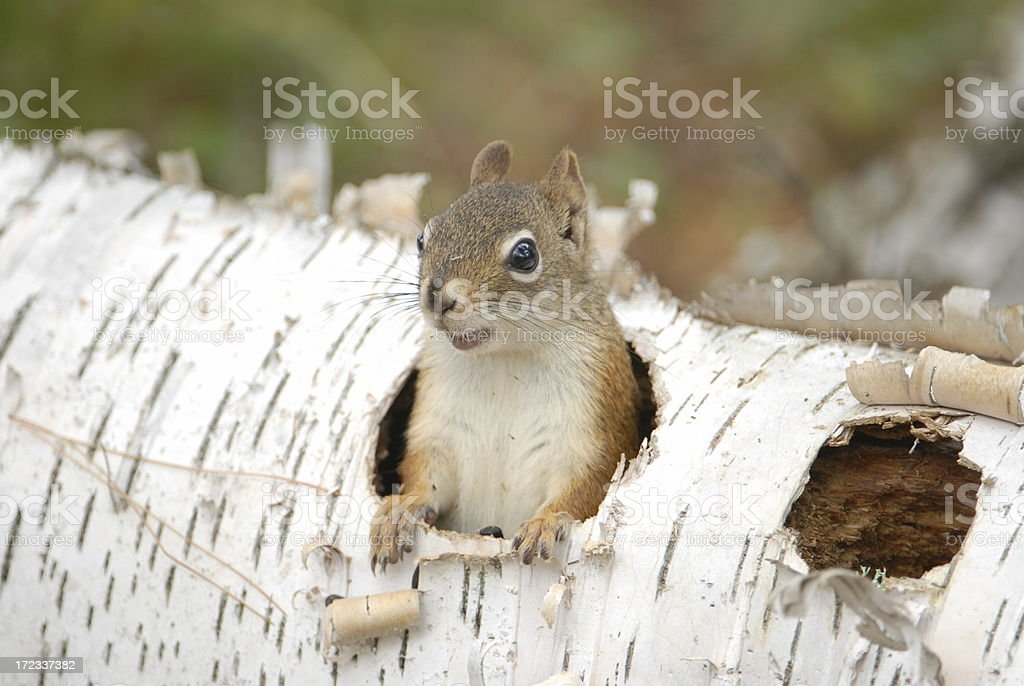 Who's out there? royalty-free stock photo