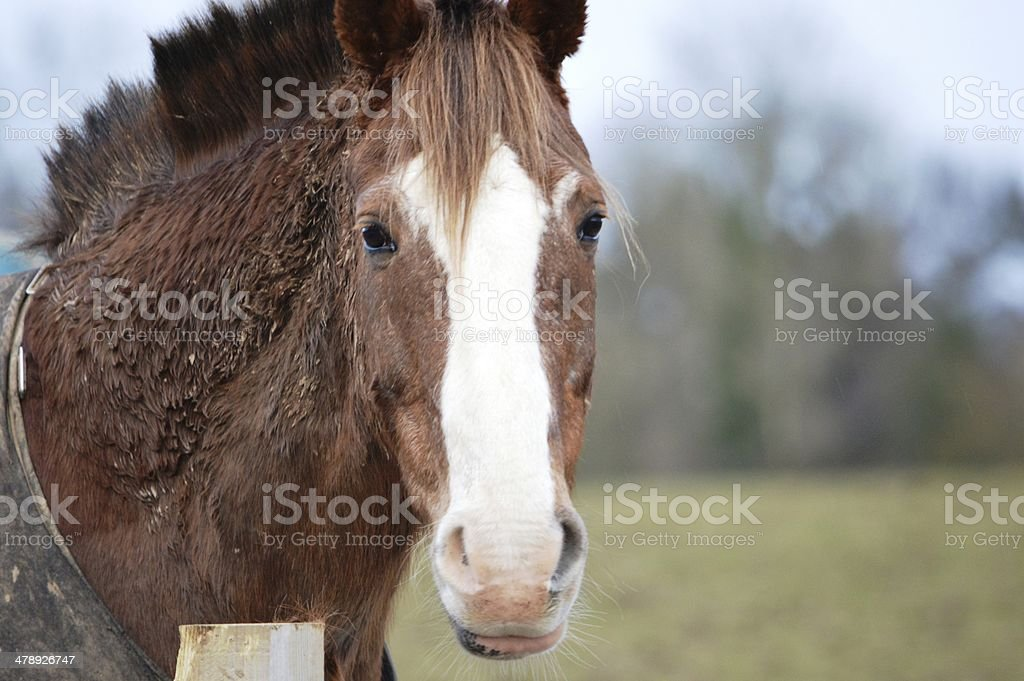 Why the long face? stock photo