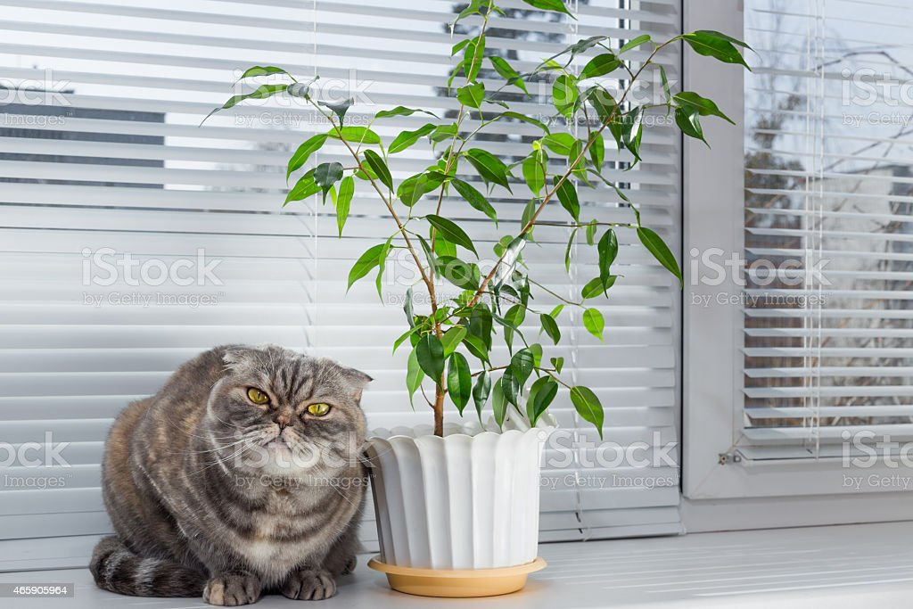 Wicked cat is looking at the photographer. stock photo