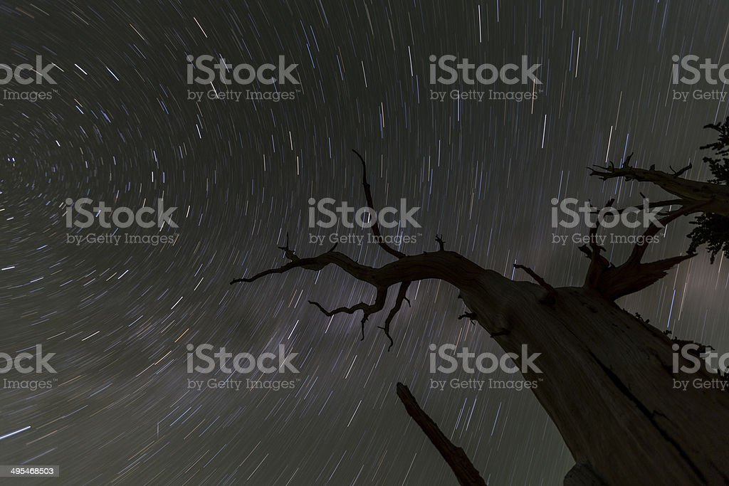 Wicked Tree Star Trails royalty-free stock photo