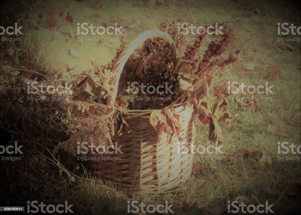 Wicker basket for autumn clean-up stock photo