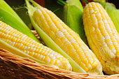Wicker basket full of sweet corn