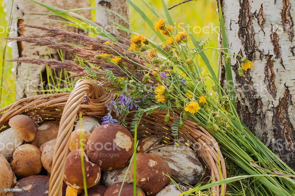 Wicker basket, mushrooms, flower, white birches stock photo