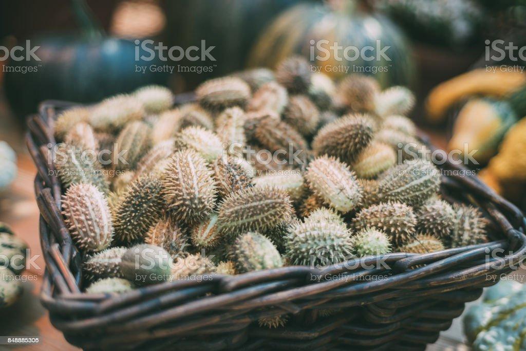 Wicker basket with wild cucumber stock photo