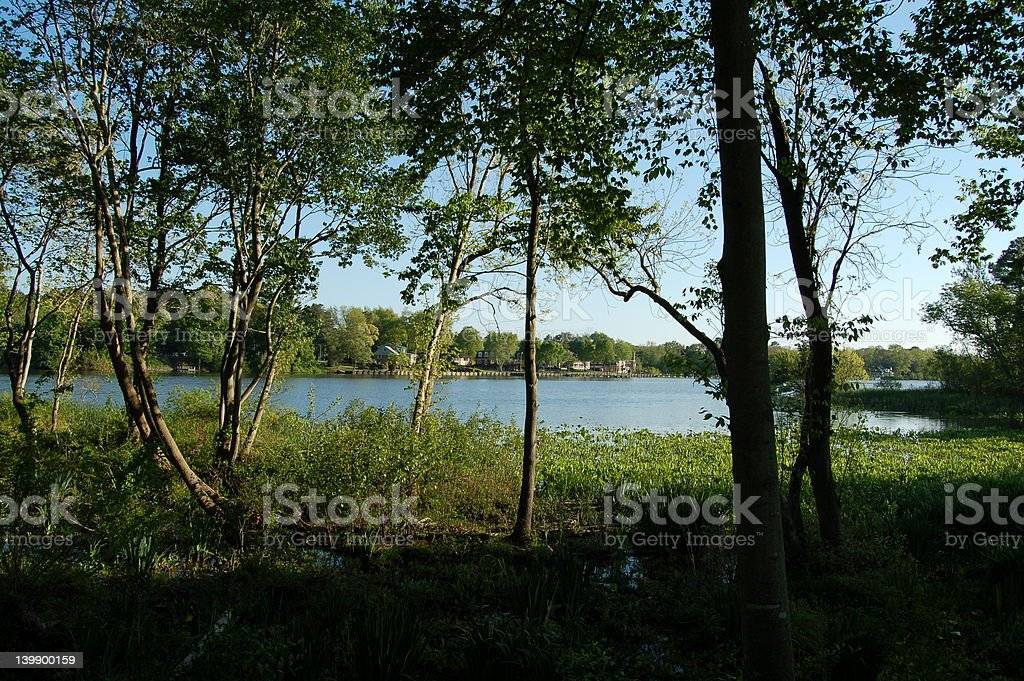 wicomico wetlands stock photo