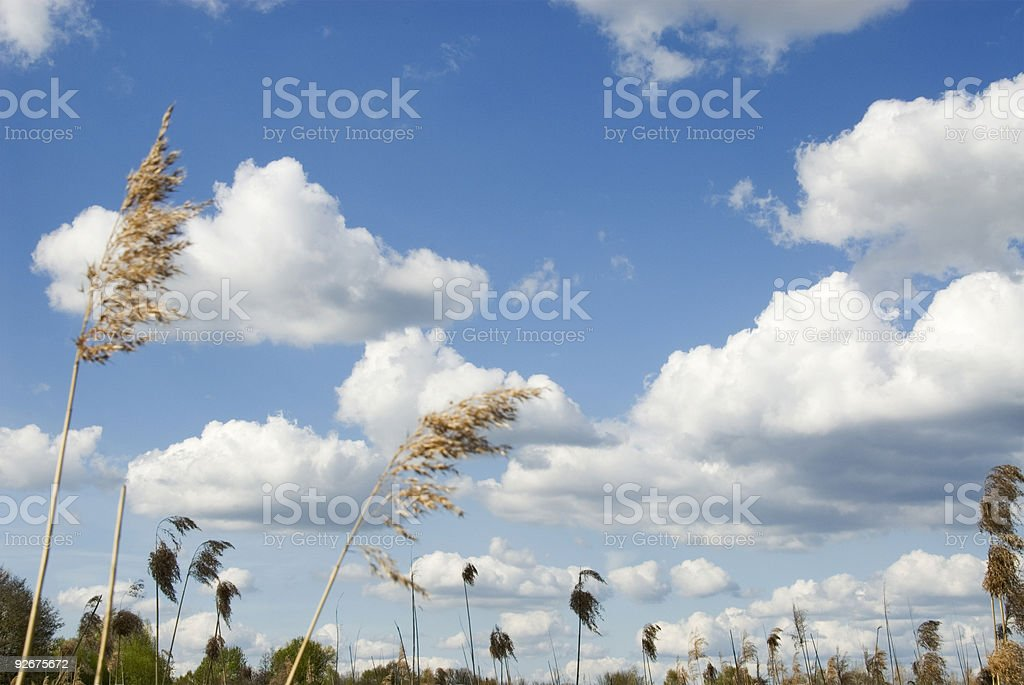 Wide and bright royalty-free stock photo