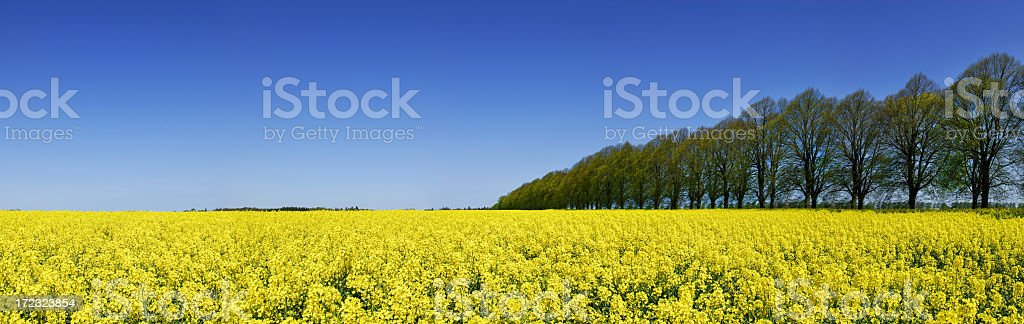 Wide angle shot of landscape of lush field of flowers royalty-free stock photo