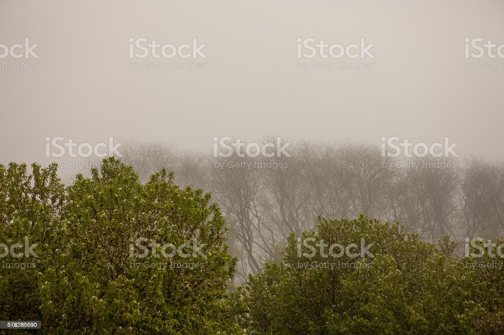 Wide angle view of spring trees with fog stock photo