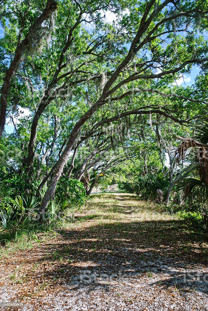 Wide footpath through pine flatwoods stock photo