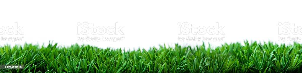 Wide grass stock photo