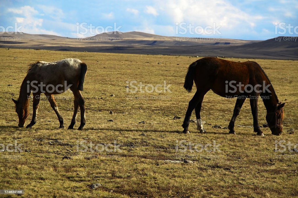 Wide meadow where two horses feeding royalty-free stock photo