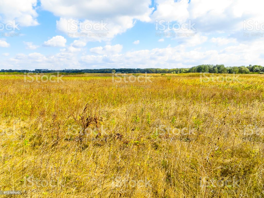 Wide meadow with the dry grass on autumn stock photo