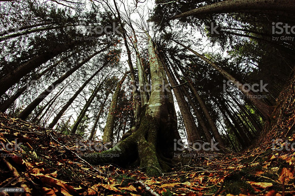Wide shot of a forest in autumn stock photo