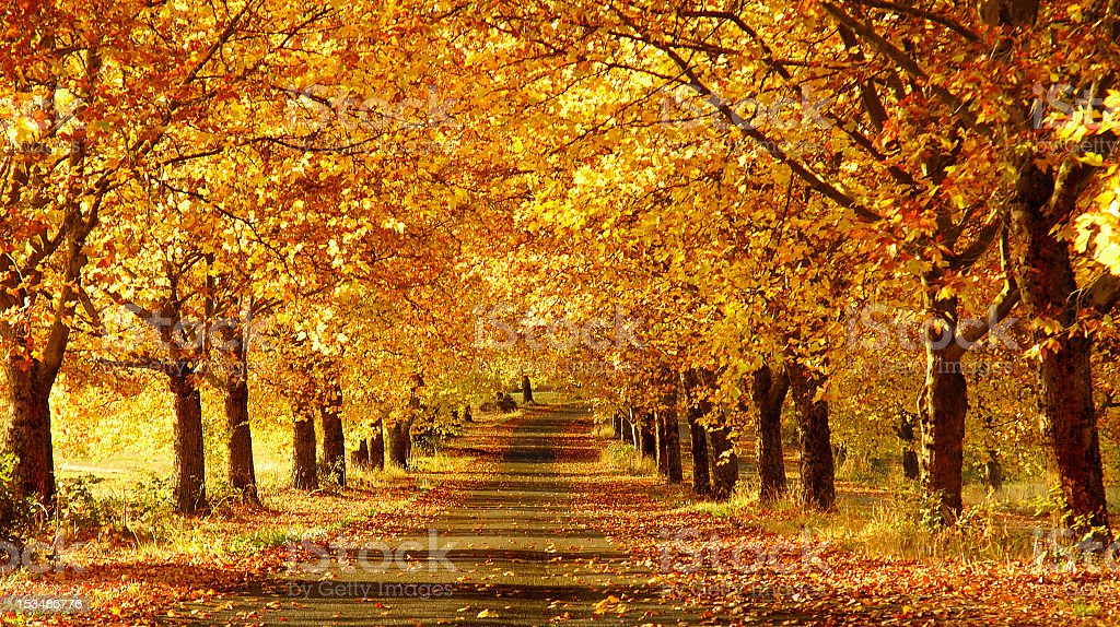 Wide shot of a pathway in the fall stock photo