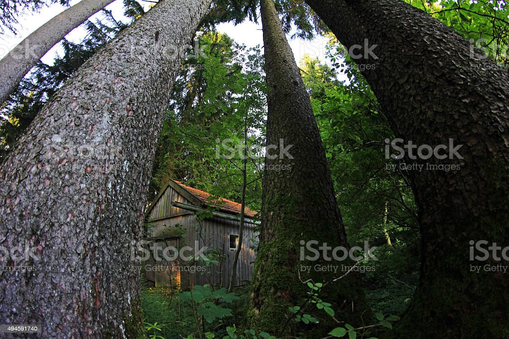 Wide shot of a wooden hut in the forest stock photo
