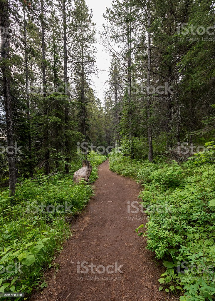 Wide Trail in Montana stock photo