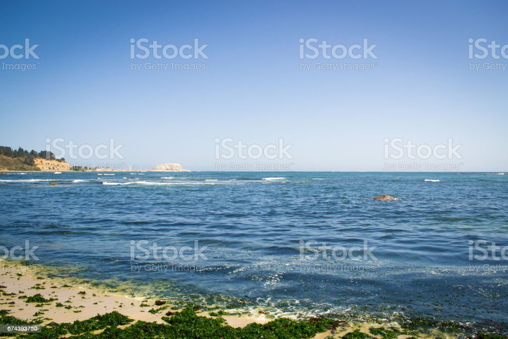Wide view of the beach with seaweed stock photo