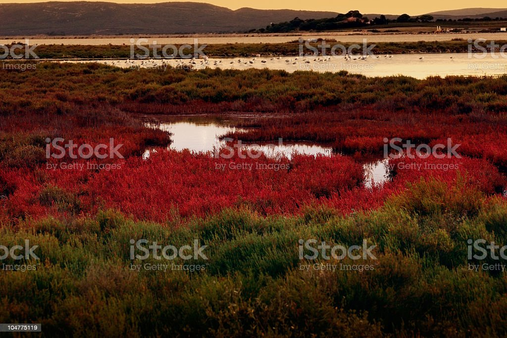 Wide view of the colorful wetlands in Carmargue at sunset stock photo
