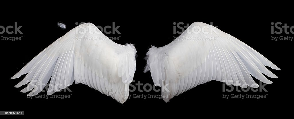 Wide white feathered wings against a black background royalty-free stock photo