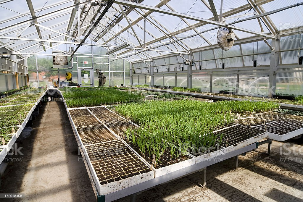 Wide-angle view of a nursery royalty-free stock photo
