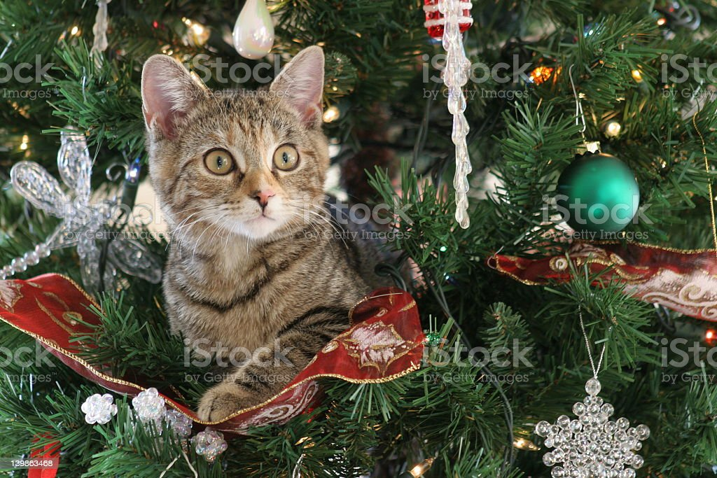 Wide-eyed kitten sitting in decorated Christmas tree stock photo