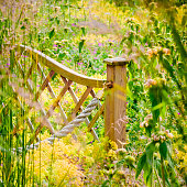 Widlflower garden fence rural outdoor countryside sunny blooming colourful plants