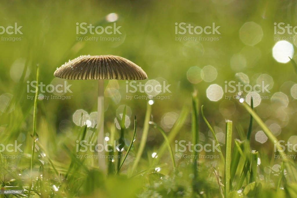 Wie aus dem Zauberwald stock photo