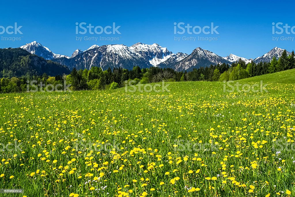 Wiese im Allgäu und Alpen stock photo