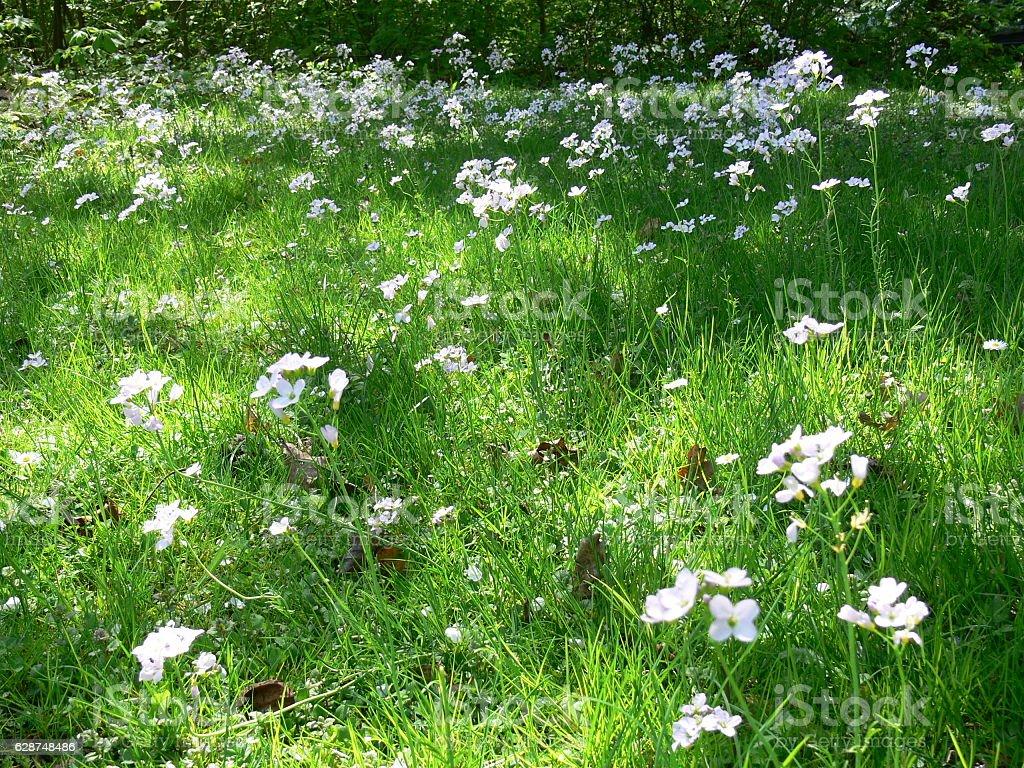 Wiese mit Blumen im Frühling stock photo
