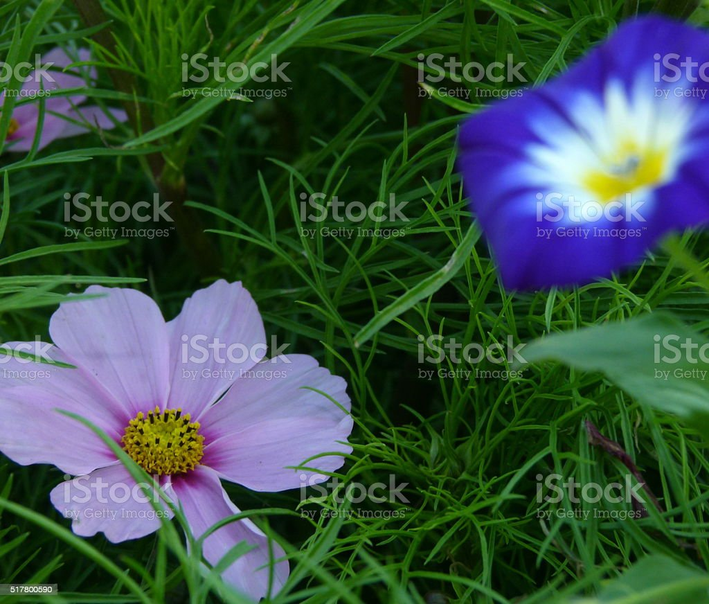 Wiesenblumen 3 stock photo