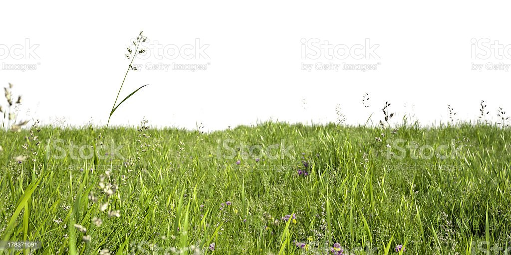 Wiesengräaser stock photo