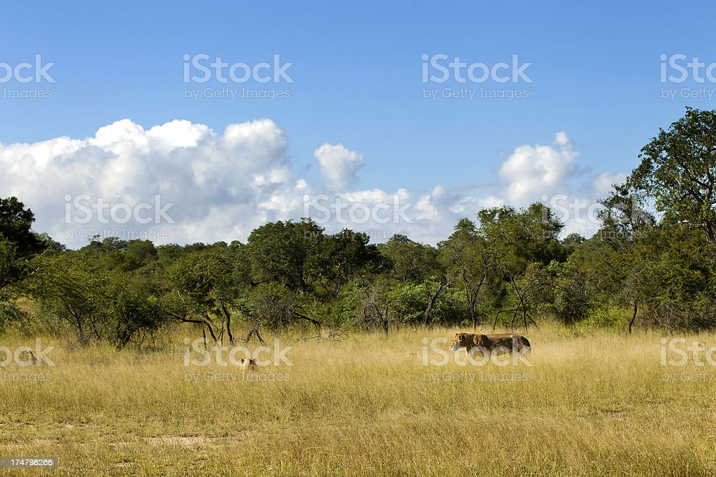 Wild Africa royalty-free stock photo