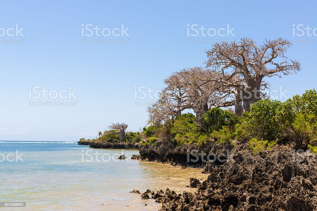 Wild African coast with cliffs and baobab trees stock photo