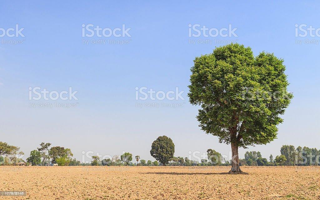 Wild Almond tree in plowing field stock photo