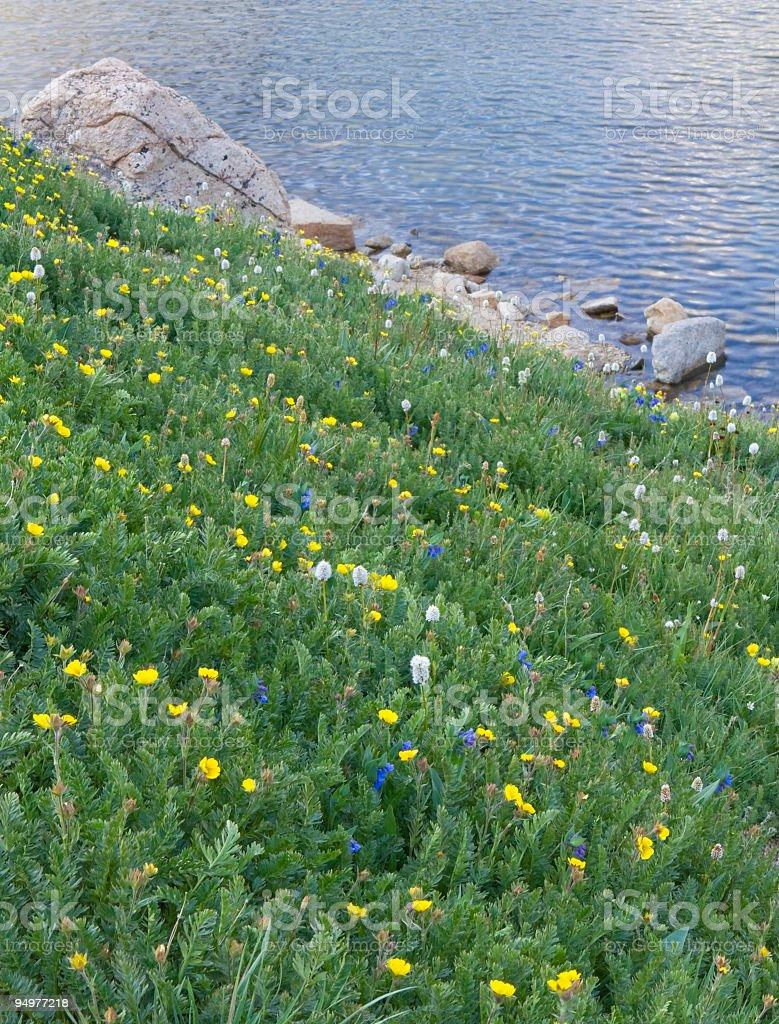 Wild Alpine Garden, Lakeside stock photo