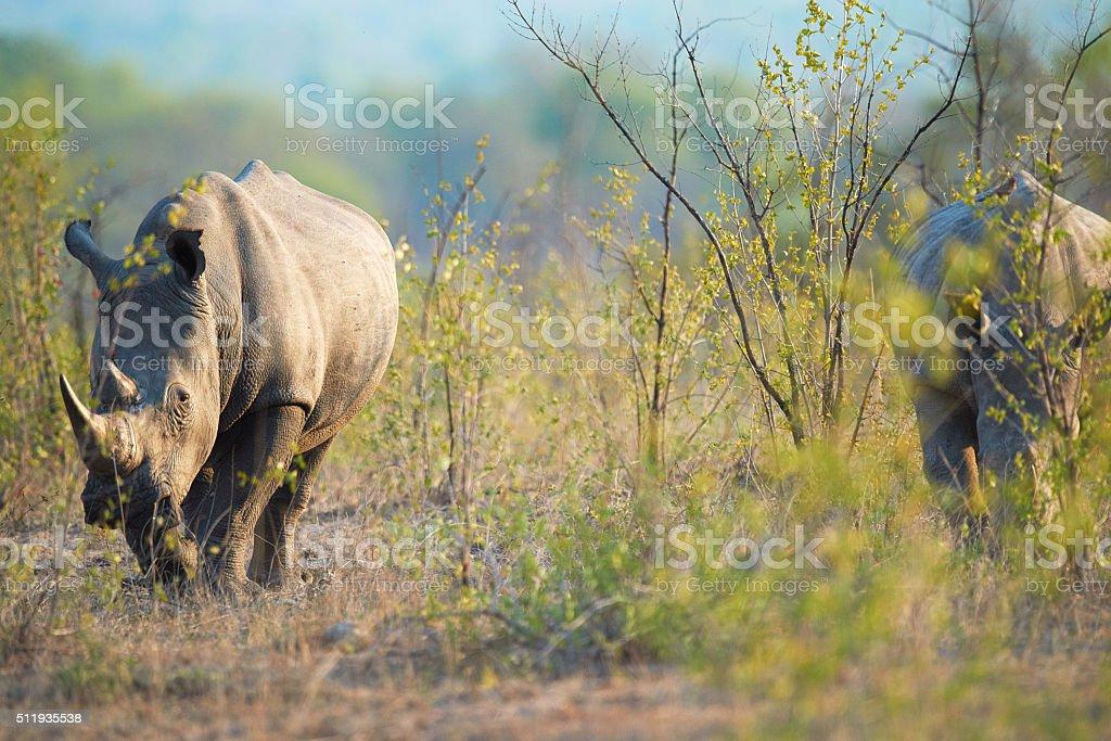 Wild and free stock photo